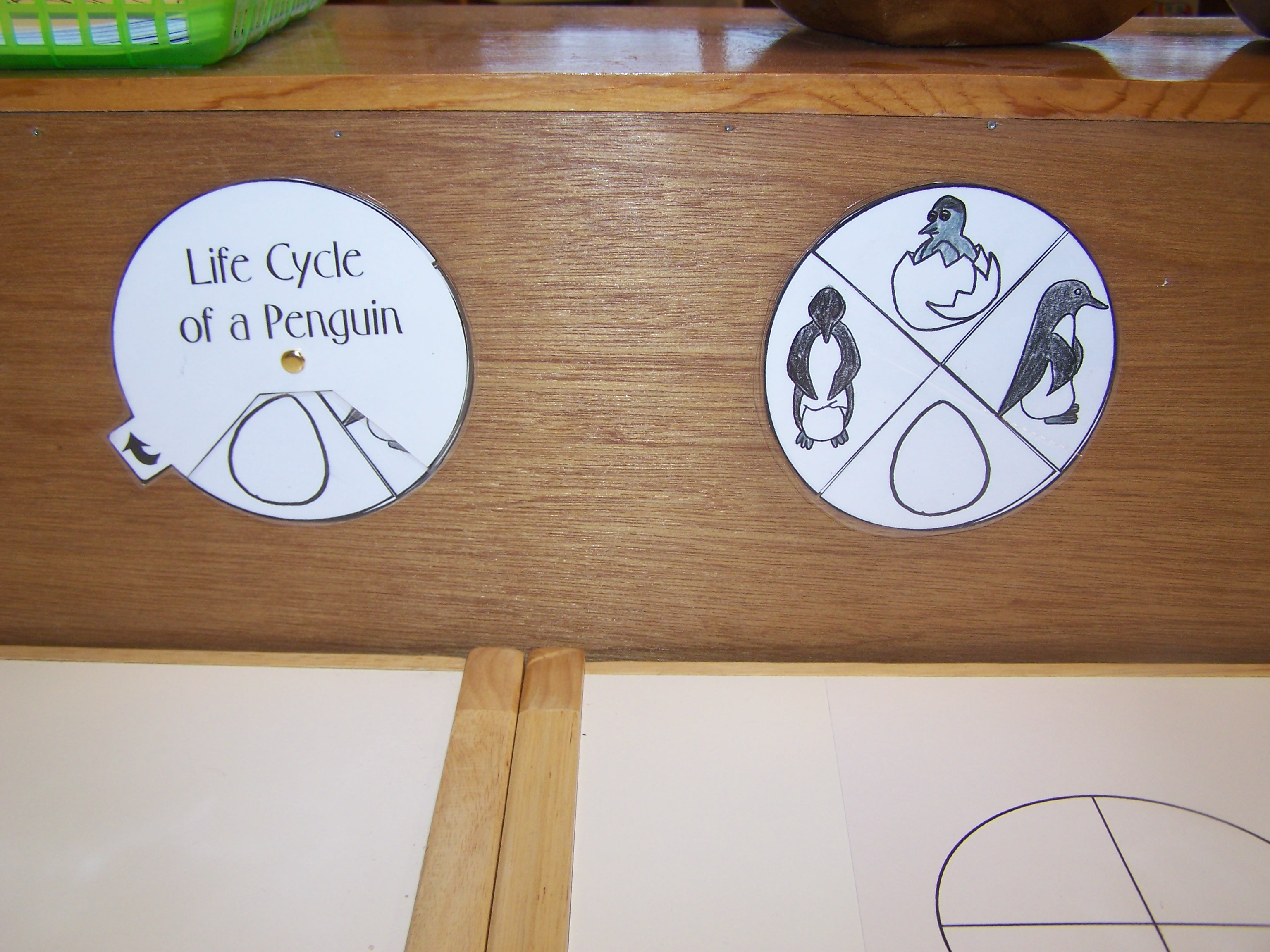 Penguin Life Cycle also by My Montessori Journey